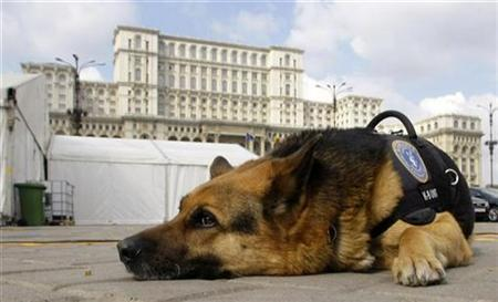 Fox, a German shepherd dog specialized in explosives detection, is presented to the media in the Constitution Square in front of Romania's Parliament Palace in Bucharest March 21, 2008. REUTERS/Bogdan Cristel
