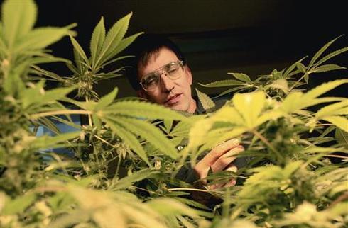 School for budding marijuana growers