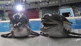 """<p>Foto de archivo de una pareja de delfines nariz de botella en un """"Delfinario"""" en Dubai, 4 jun 2008. Una mujer demandó a un zoológico del área de Chicago tras caer en el 2008 cerca de una exhibición de delfines, acusando a sus cuidadores de alentar a los mamíferos a lanzar agua y no proteger a los espectadores de las superficies húmedas, dijo la prensa local el jueves. REUTERS/Jumana El Heloueh</p>"""