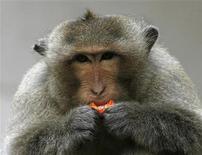 <p>Foto de archivo de un mono macaco en Lopburi, Tailandia, 19 ago 2009. Tailandia está intentando limitar el número de monos que se pasean libremente en el pueblo de Lopburi luego de quejas de residentes de que los primates, una de las atracciones turísticas del lugar, se están volviendo más molestos y agresivos. REUTERS/Chaiwat Subprasom</p>