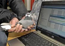 """<p>O pombo Winston, de 11 meses de idade, """"transferiu"""" os dados do cartão de memória que carregava mais rápido que a Internet de baixa velocidade do laptop em Durban, na África do Sul. REUTERS/Rogan Ward</p>"""