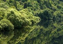 <p>Trees are reflected in the still waters along a river near Eugene, Oregon July 1, 2008. REUTERS/Mike Blake</p>