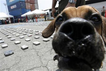 A guard dog attached to the Venezuelan National Guard stands watch as the media is shown more than a ton of seized cocaine ready for shipment in Puerto Cabello, July 27, 2009. REUTERS/Edwin Montilva