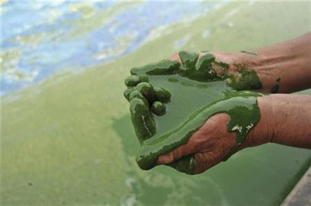A fisherman fills his cupped palms with water from the algae-filled Chaohu Lake in Hefei, Anhui province, June 16, 2009. REUTERS/Stringer