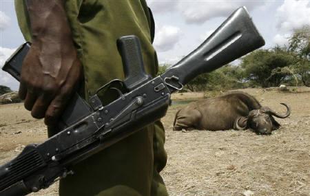 10月15日、深刻な干ばつに見舞われているケニアで、野生動物が危機的な状況に置かれている。写真は9日、銃を手に持つケニア野生生物公社のレンジャー(2009年 ロイター/Thomas Mukoya)