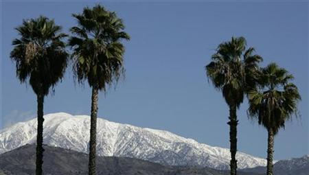 Snow is shown on the San Bernardino mountians framed by four palm trees in Covina, California December 26, 2008. REUTERS/Fred Prouser