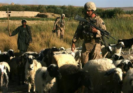 An Afghan shepherd tries to guide his sheep away from U.S. Marines of the 8th regiment second battalion as they conduct a patrol in Mian Poshtay area, in Helmand province, in this October 18, 2009 file photo. REUTERS/Asmaa Waguih/Files
