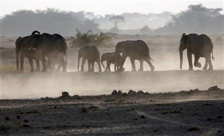 A family of elephants walk to a water pond at dusk in Amboseli national park, 290 km (188 miles) southeast of capital Nairobi August, 29, 2007. REUTERS/Goran Tomasevic