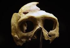 <p>Réplica de um crânio de neandertal é exposto no Museu Neandertal em Krapina, na Croácia. O museu foi aberto na semana passada, erguido no local em que cientistas encontraram a maior concentração na Europa de restos de neandertais. 25/02/2010 REUTERS/Nikola Solic</p>