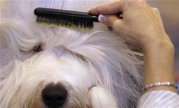 <p>Un cane in una foto d'archivio. REUTERS/Phil Noble (BRITAIN - Tags: ANIMALS SOCIETY)</p>