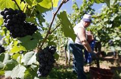 <p>Рабочие собирают виноград Пино Нуар на виноградниках Люсьена Альбрехта в Оршвире, Франция 31 августа 2009 года. Рекордное количество любителей вина из Китая прибыло в Бордо на дегустацию напитков урожая 2009 года, а китайские инвесторы все больше интересуются покупкой винодельческих хозяйств во Франции. REUTERS/Vincent Kessler</p>