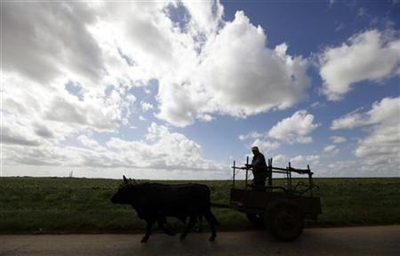 A Cuban farmer rides a cart pulled by oxen near the village of Artemisa, some 80 km (50 miles) west of Havana February 6, 2010. REUTERS/Desmond Boylan
