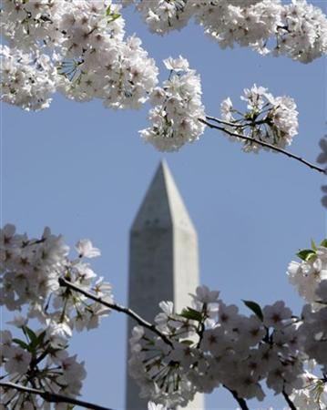 The Washington Monument is framed by cherry trees in bloom in Washington in April 2, 2010. REUTERS/Yuri Gripas
