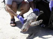 <p>Imagen de archivo de una tortuda marina muerta en las costas de Gulfport, Misisipi. Mayo 4 2010. Científicos ven muestras de siete delfines y más de 100 tortugas marinas hallados muertos en la costa del Golfo de México en las últimas semanas para ver si fueron víctimas del derrame de crudo en la región, dijeron el jueves funcionarios de Estados Unidos. REUTERS/Rick Wilking/ARCHIVO</p>