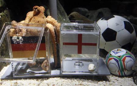 6月25日、ドイツの水族館で飼育されているタコが、サッカーW杯決勝トーナメントでドイツがイングランドに勝つと予想(2010年 ロイター/Wolfgang Rattay)
