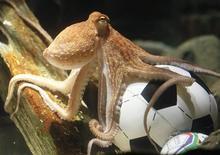 """<p>O polvo Paul em aquário na Alemanha. Mundialmente célebre pela precisão dos seus palpites durante a Copa do Mundo, o """"polvo oráculo"""" ficará na Alemanha apesar de uma proposta espanhola para adquirir o molusco-talismã. 09/07/2010 REUTERS/Wolfgang Rattay</p>"""