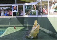 <p>Suivant l'exemple de Paul le poulpe, un crocodile marin nommé Harry a pronostiqué la victoire du Premier ministre travailliste australien Julia Gillard lors des élections législatives de samedi, qui s'annoncent particulièrement serrées. Le reptile de Darwin a dévoré la carcasse de poulet qui était associée à la caricature de Julia Gillard, négligeant celle qui accompagnait un portrait du chef de l'opposition, le conservateur Tony Abbott. /Photo prise le 19 août 2010/REUTERS/ Wade Huffman-Crocosaurus Cove</p>