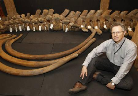 Francis Grew, senior archaeology curator at the Museum of London, poses for a photo with the bones of a North Atlantic right whale which were found in the river Thames at Greenwich, at the Museum of London Docklands, September 9, 2010.  REUTERS/Andrew Winning