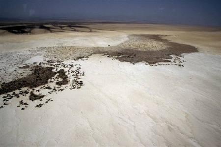 A camel caravan is seen at the edge of the salt pan in Ethiopia's Danakil depression in this aerial photo taken November 29, 2004 near Dallol volcano. REUTERS/Michel Laplace-Toulouse/Files