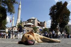 <p>A stray dog lies outside the Hagia Sophia museum in Istanbul September 17, 2010. REUTERS/Murad Sezer</p>