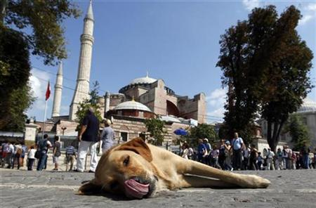 A stray dog lies outside the Hagia Sophia museum in Istanbul September 17, 2010. REUTERS/Murad Sezer
