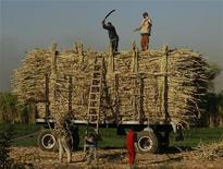 <p>Farmers pack sugar cane in the southern Egyptian town of Nagaa Hamady in Qena, some 700 km (435 miles) south of Cairo, January 10, 2010. REUTERS/Asmaa Waguih</p>