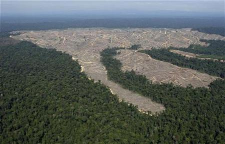An aerial view of deforestation at Indonesia's Sumatra island, August 5, 2010. REUTERS/Beawiharta