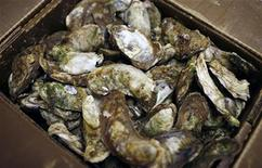 <p>Oysters are shown in this June 21, 2010 file photo. REUTERS/Mike Segar</p>