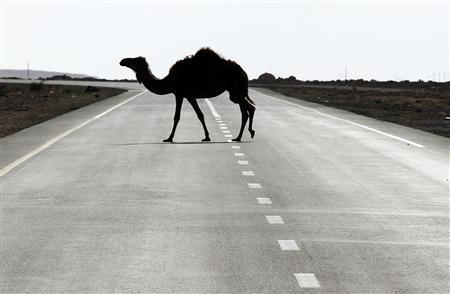 A camel crosses a road near Ras Lanuf, March 11, 2011. REUTERS/Goran Tomasevic