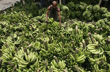 A labourer arranges bananas at a wholesale fruit market in the eastern Indian city of Siliguri May 27, 2009. REUTERS/Rupak De Chowdhuri