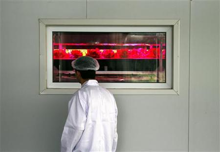 A worker looks through a window at lettuce growing under artificial light in a liquid solution at China's first computer-controlled greenhouse seedling factory, located on the outskirts of Beijing, August 27, 2010. REUTERS/David Gray