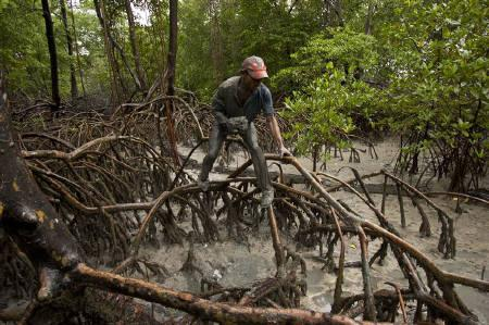 Brazilian fisherman Jose Benedito, 39, searches for crabs in the mud surrounding mangrove roots on the coast of Para State where the fresh water from the Amazon River mixes with the Atlantic Ocean, in Braganca February 16, 2011. REUTERS/Paulo Santos/Files