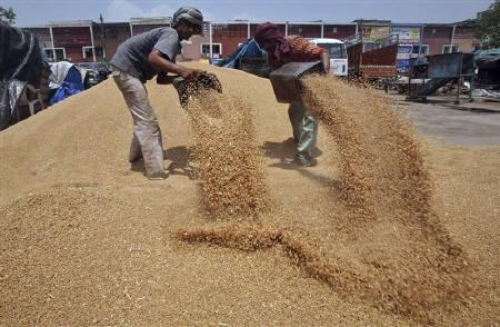 Labourers remove dust from wheat at a grain market in the northern Indian city of Chandigarh June 22, 2010. REUTERS/Ajay Verma