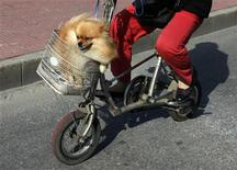 <p>A dog rides in a bicycle basket riden by its owner along a street in central Beijing September 22, 2009. REUTERS/David Gray</p>