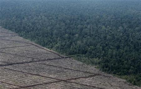 A view of deforestation on Indonesia's Sumatra island, August 5, 2010. REUTERS/Beawiharta