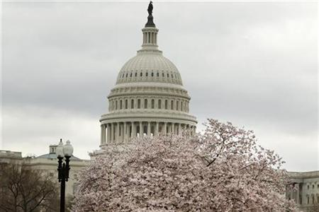 U.S. Capitol Dome is pictured behind a cherry blossom tree in Washington, March 24, 2011. REUTERS/Hyungwon Kang