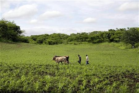 Farmers prepare their land for crops at the northern city of Ocotal June 20,2011. REUTERS/Oswaldo Rivas