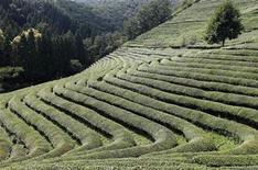 <p>A man (top R) walks at a terraced green tea farm in Boseong, about 400 km (248 miles) south of Seoul August 26, 2009. REUTERS/Lee Jae-Won</p>