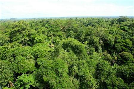 General view of La Selva biological station in Sarapiqui, 80 miles (129 km) north of San Jose, Costa Rica January 11, 2006. REUTERS/Files