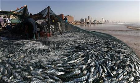 Fishermen empty nets of sardines on Durban's Addington beach, July 26, 2010. REUTERS/Rogan Ward