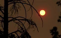 Сухое дерево на фоне солнца в Нью-Мехико, 10 июня 2011 года. Итальянец, приехавший в Молдавию за невестой, три недели прятался в лесу от мнимых преследователей, питаясь грибами и ягодами. REUTERS/Jim Urquhart