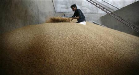 A labourer works on a heap of wheat inside a grain-sorting unit at Sanand in Gujarat April 7, 2011. REUTERS/Amit Dave/Files