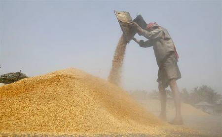 A labourer works at a rice mill on the outskirts of Agartala, capital of Tripura March 3, 2011. REUTERS/Jayanta Dey/Files