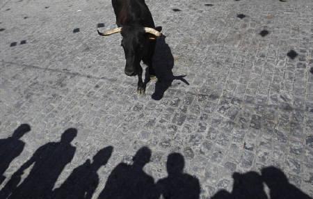 People look at a heifer during the Feast of Santa Ana in the southern Spanish village of El Viso July 27, 2010. REUTERS/Javier Barbancho/Files