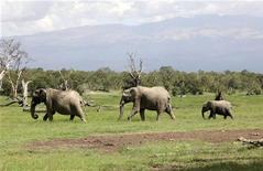 A family of elephants in the Ol Pejeta wildlife conservancy in Kenya, January 19, 2010.  REUTERS/Noor Khamis