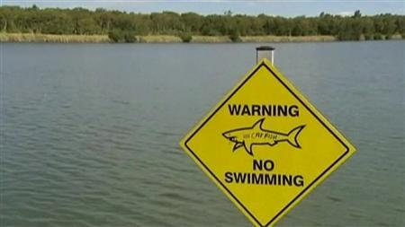 A golf course that bites: Screenshot of Carbrook Gold Course's shark-infested lake in Brisbane, Australia. REUTERS/Video