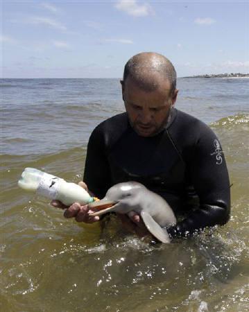 10月17日、南米ウルグアイの浜辺で保護されたメスの赤ちゃんイルカが、海で泳いだりミルクを飲んだりするなど元気な姿を見せた(2011年 ロイター/Andres Stapff)