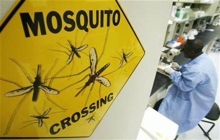 A worker Solomon Conteh dissects a mosquito at a lab in a file photo, October 26, 2007.  REUTERS/Jim Young