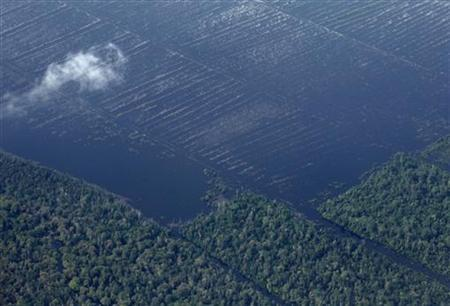 An aerial view of peatland areas bordered by rainforest (bottom) in Indonesia's Riau province, November 9, 2009. REUTERS/Beawiharta