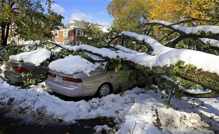 A large tree fell on top on cars from the weight of an early snowfall in Worcester, Massachusetts October 30, 2011. REUTERS/Adam Hunger